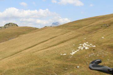 ultimo tratto di salita su SP 335 verso Colle di Sampeyre
