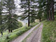 Splendidi boschi intorno a Joussaud