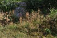Lo stacco del C19 dalla sterrata presso l'Alpe Bossole, seminascosto dall'erba alta