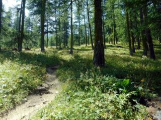 bella discesa nel bosco verso Valpreveyre
