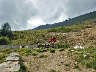 Giorgio in fuga dalla oche all'alpe Cortina...