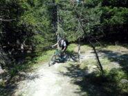 lungo il facile percorso dell'easy downhill nella parte bassa