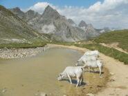 Colle Valle Stretta