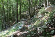 tratto nel bosco