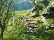 Sentiero all'uscita dal bosco