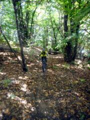 splendido percorso nel bosco!
