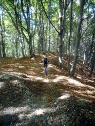 magico bosco nella parte alta dell'olocco freeride