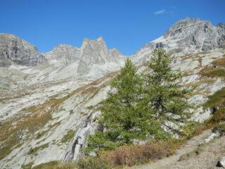 l'ambiente alpino della Rognosa d'Etiache
