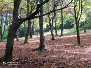I bei boschi puliti, salendo dal sentiero alternativo alla strada dopo Straluzzo e Forneri.