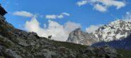 Stambecco e cime