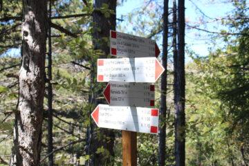 crocevia nel tratto boschivo del sentiero 135A