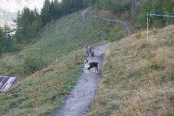 Tenero incontro sul sentiero all'Alpeggio di Secheron