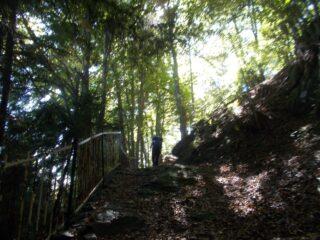 un tratto del sentiero boschivo percorso al ritorno