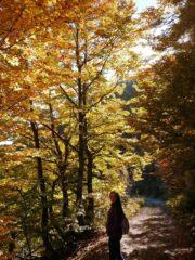 Colori caldi nei boschi