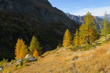 è arrivato l'autunno, i larici si tingono di arancione e giallo
