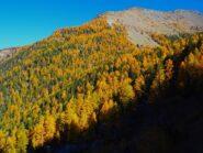 I meravigliosi boschi sotto la P.ta Chermontane.